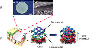Biomaterials for in situ tissue regeneration development and