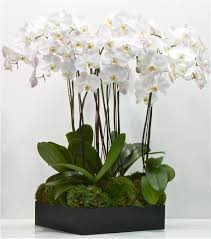 flower delivery los angeles los angeles florist flower delivery by la orchidia