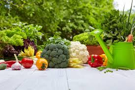 vegetable gardening for beginners the complete guide