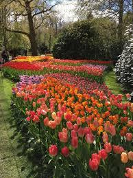 flower garden in amsterdam keukenhof gardens amsterdam
