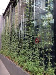 Best Plants For Vertical Garden - wonderful vertical garden 17 best ideas about vertical gardens on