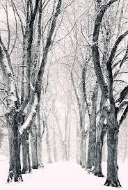 25 trending trees in winter ideas on
