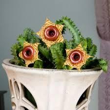 135 best brandy the botanist images on pinterest plants cacti