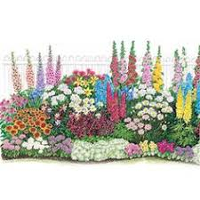 endless bloom perennial garden non stop flowers from spring