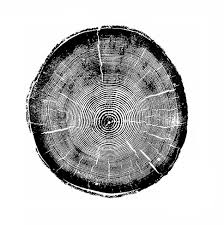 tree rings art images Tree rings quot black and white canvas wall art octotreasure png