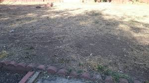Alternative To Grass In Backyard by I Re Seeded My Lawn This Year Diy