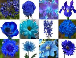 blue flowers for wedding des moines blue flowers des moines blue flowers for sale