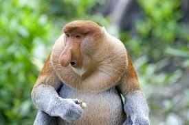 Sexy Monkey Meme - meme template search imgflip