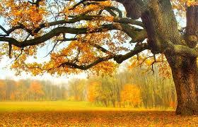 fields park landscape pretty autumn splendor nature tree forest