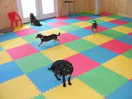 Dog Daycare Floor Plans by Dog Daycare Scale 1 4