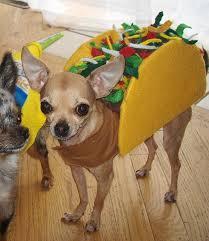 Taco Costume Stoli Taco Taco Costume Costumes And Dog