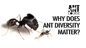 ant course 2016 california academy of sciences