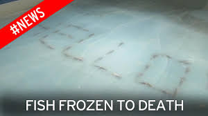skating rink with 5 000 dead fish spelling out