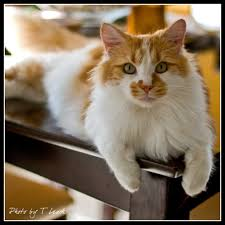 thanksgiving kitty tleach0608 deviantart