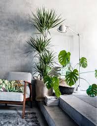 dracaena drakenbloedboom monstera deliciosa gatenplant styling