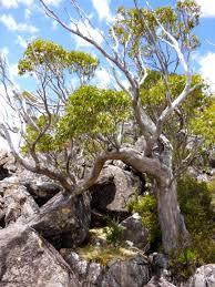 cool trees lanes peak and mount lord 27 november 2013 rockmonkeyadventures