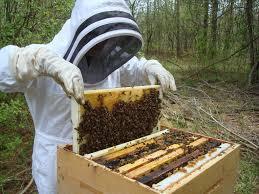 honey bee workshops