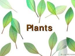 kingdom plantae plants powerpoint presentation lesson plan by
