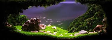 Aquascaping Competition Nigeria News Tank Warfare Welcome To The Highly Competitive