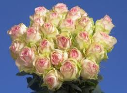 Wholesale Roses 36 Best Multi Color Roses Images On Pinterest Wholesale Roses