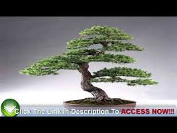 how to choose bonsai trees for sale