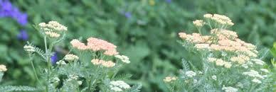 Flowering Shrubs For Partial Sun - sun partial sun partial shade shade dappled sun full shade