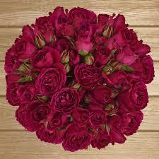 bulk flowers online spray roses 40cm pack 120 stems sprays centerpieces and weddings