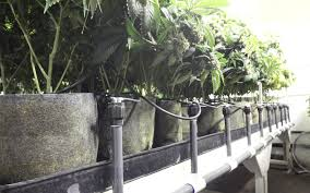 grow basics for the first timer everything you need to know