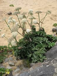 native plants of oregon native plants of oregon