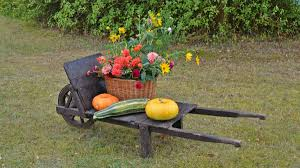 free images lawn cart flower food vehicle produce pumpkin