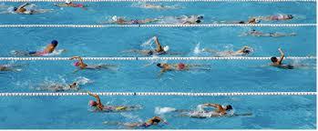 fun facts swimmingpool com