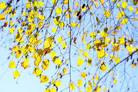 flora sky apk free free images branch sky leaf flower petal pattern