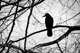 free photo bird tree black and white free image on pixabay
