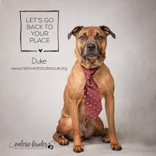 cat adoption dog adoption one love animal rescue mt laurel nj