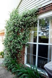 129 best suess garden images on pinterest garden ideas flower