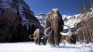 articles wooly mammoths flipboard