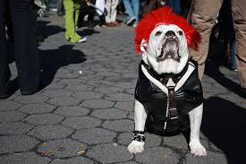 Halloween Costumes Bulldogs 30 Amazing Dog Costumes Halloween Puppy Leaks