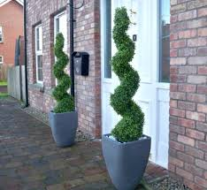home decoration front door double spiral topiaries inspirative
