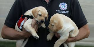 the tsa wants you to adopt dogs dogs that failed explosive