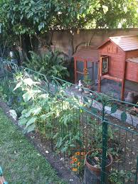Backyard Chicken Run by Sunny Simple Life Life In The Chicken Run Garden