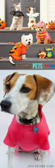 great dog halloween costumes best 25 pet halloween costumes ideas on pinterest puppy