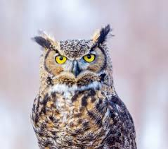 americas best owl commercial actress three classic owl commercials owl things considered