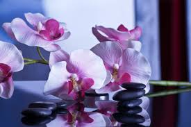 imagenes flores relajantes fotos gratis flor púrpura pétalo relajarse descanso rosado