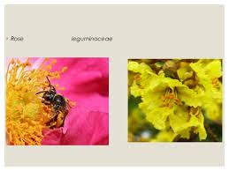 Reproduction In Flowering Plants - sexual reproduction in flowering plants