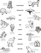 biome matching game worksheet asu ask a biologist