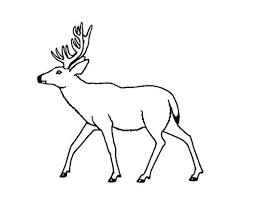 christmas reindeer coloring pages free mule deer page book