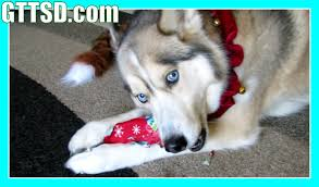 dogs opening presents santa paws came puppy