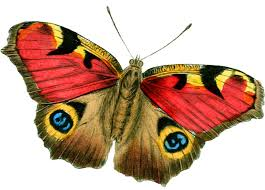 tangle u0027s treasures vintage butterflies free clip art