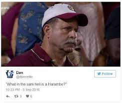 Florida State Memes - what in the sam hell is a harambe frustrated florida state dad