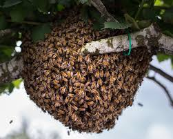 how to catch a bee swarm bee built